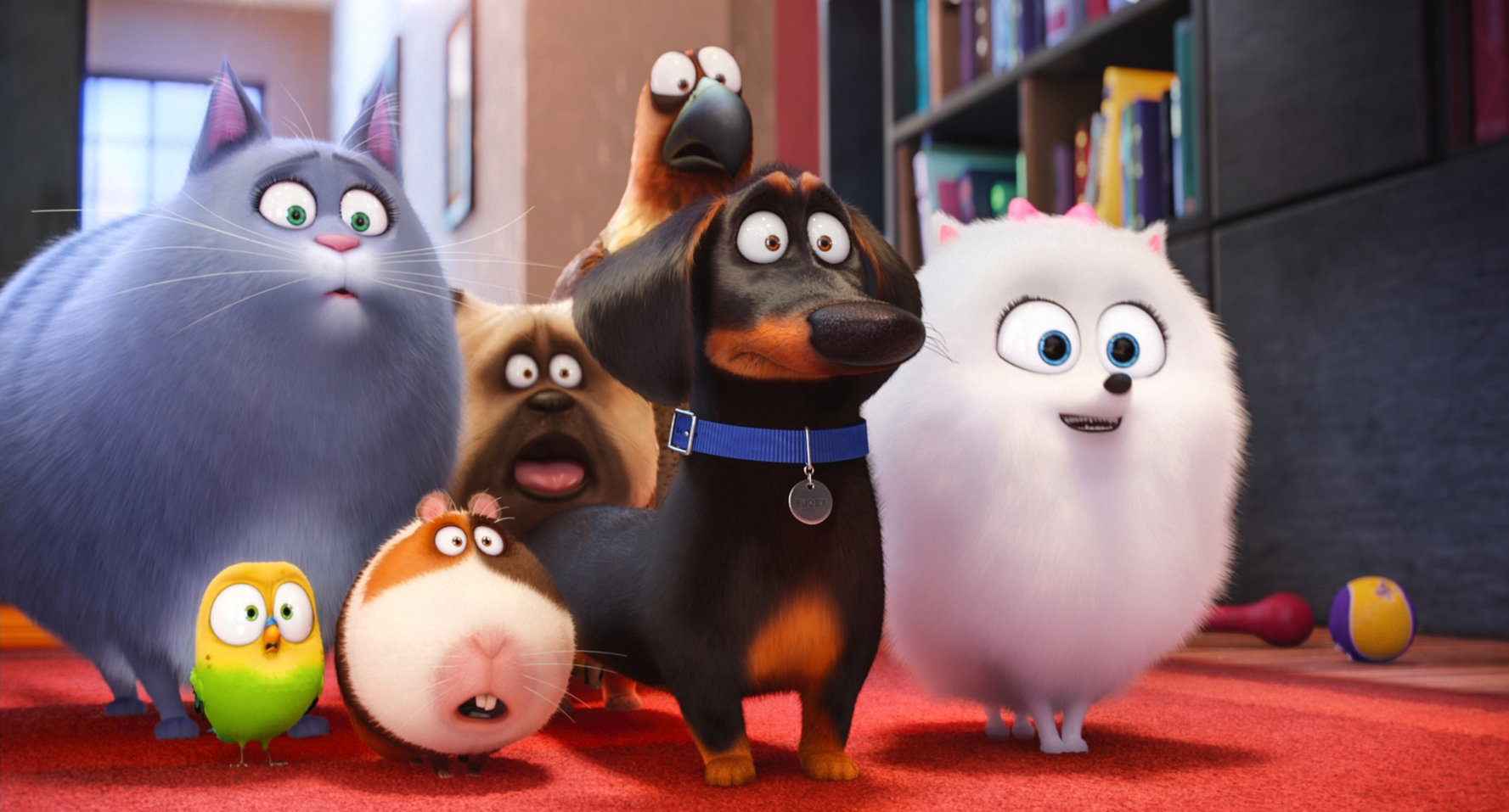 The Secret Life of Pets. Photo courtesy: Universal Pictures