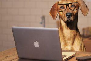 dog-using-laptop-computer-public-domain-pictures-20161025085850658